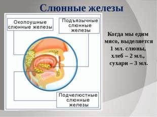 Слюнные железы Когда мы едим мясо, выделяется 1 мл. слюны, хлеб – 2 мл., суха