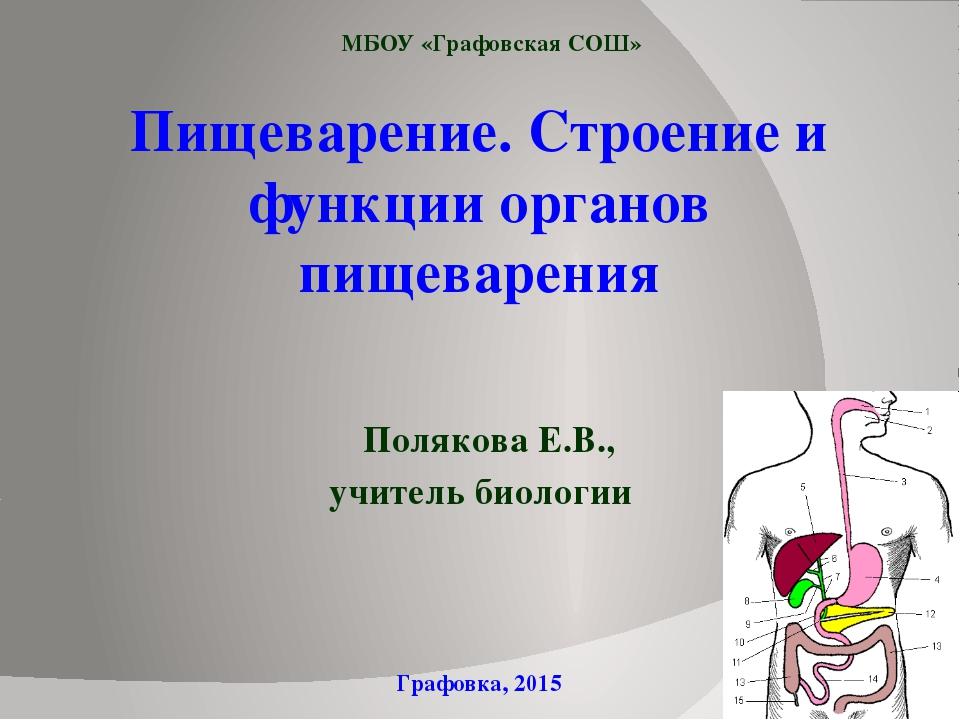 Пищеварение. Строение и функции органов пищеварения Полякова Е.В., учитель би...