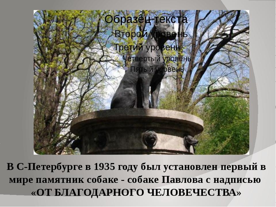 В С-Петербурге в 1935 году был установлен первый в мире памятник собаке - соб...
