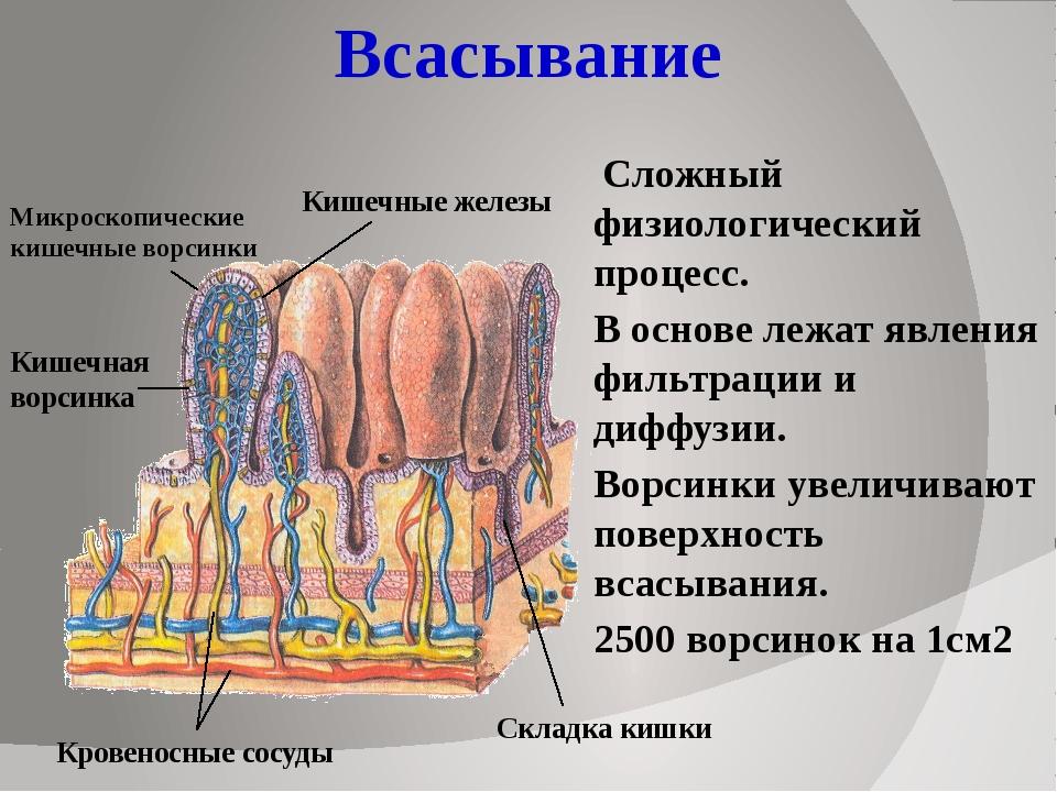 Всасывание Сложный физиологический процесс. В основе лежат явления фильтрации...