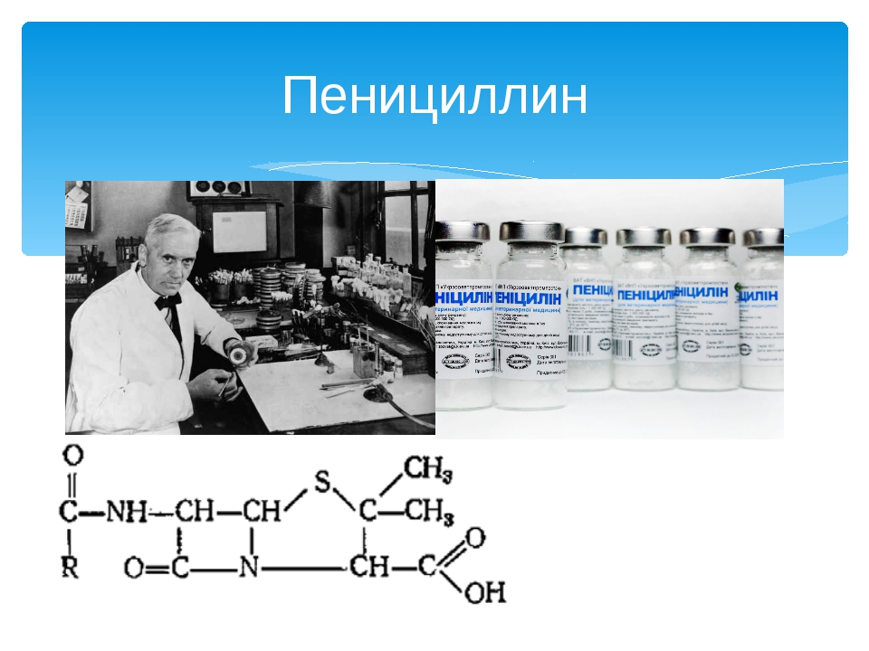 penicilin production Large-scale commercial production of penicillin during the 1940s opened the era of antibiotics and is recognized as one of the great advances in civilization the discovery of penicillin and the recognition of its therapeutic potential occurred in england, while discovering how to mass-produce the.