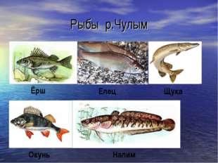 Рыбы р.Чулым Ёрш Елец Щука Окунь Налим