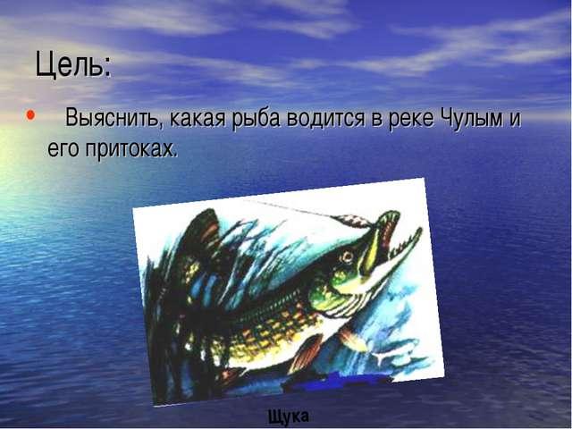 Цель: Выяснить, какая рыба водится в реке Чулым и его притоках. Щука