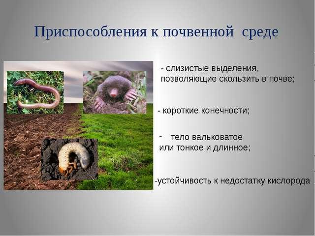 Приспособления к почвенной среде - слизистые выделения, позволяющие скользить...