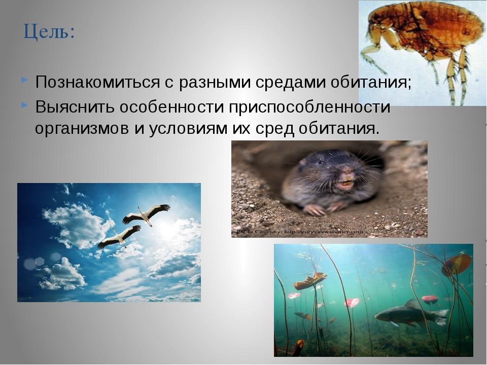Цель: Познакомиться с разными средами обитания; Выяснить особенности приспосо...