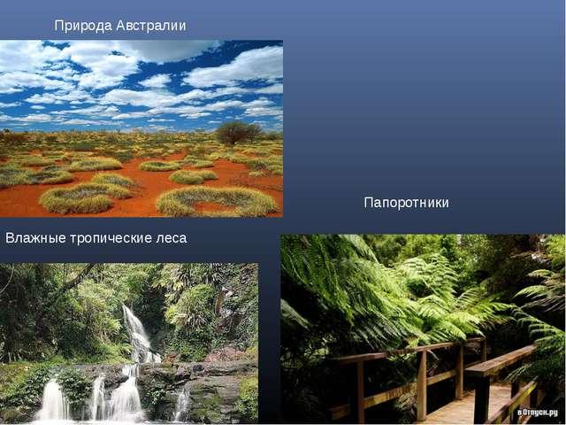 Природа Австралии Папоротники Влажные тропические леса