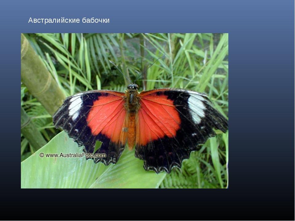 Австралийские бабочки