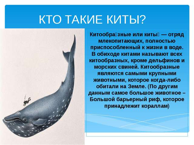 КТО ТАКИЕ КИТЫ? Китообра́зные или киты́ — отряд млекопитающих, полностью прис...