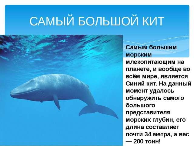 Самым большим морским млекопитающим на планете, и вообще во всём мире, являет...