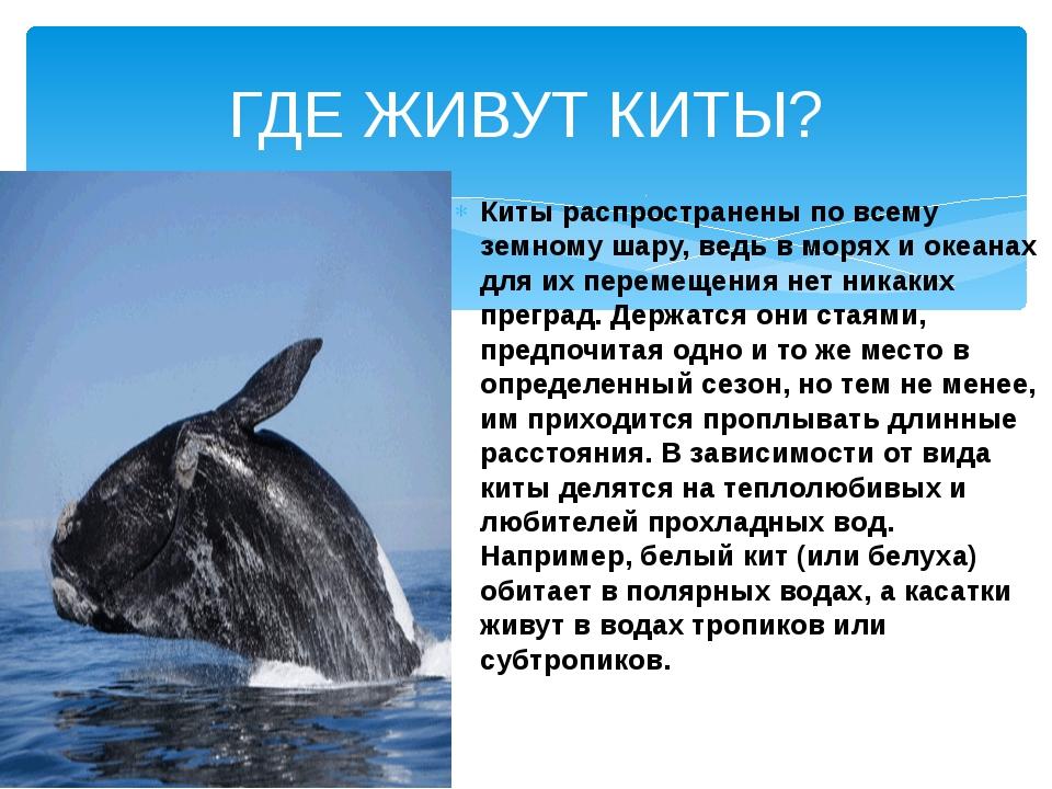 Киты распространены по всему земному шару, ведь в морях и океанах для их пере...