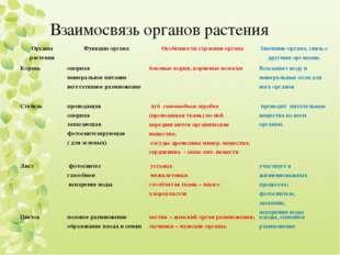 Взаимосвязь органов растения Органы растенияФункции органаОсобенности строе