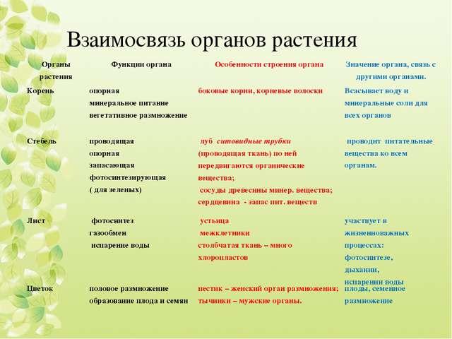 Взаимосвязь органов растения Органы растенияФункции органаОсобенности строе...