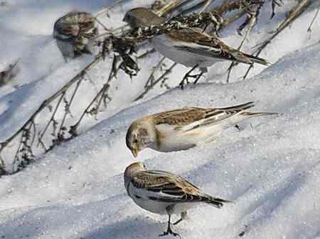 птицы.jpg