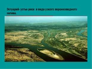 Эстуарий- устье реки в виде узкого воронковидного залива.