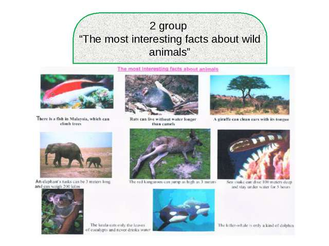 "2 group ""The most interesting facts about wild animals"""