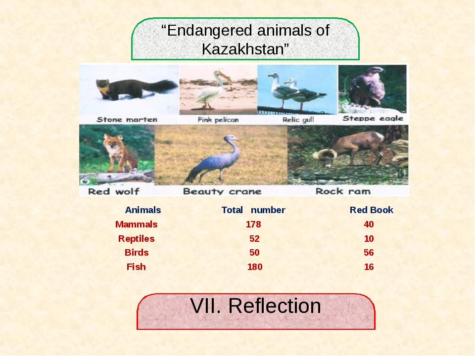 """Endangered animals of Kazakhstan"" VII. Reflection Animals	 Total number	 Red..."