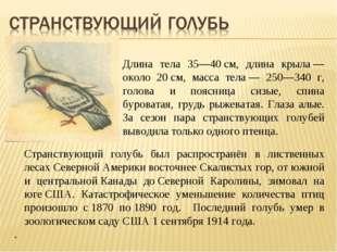 Длина тела 35—40см, длина крыла— около 20см, масса тела— 250—340 г, голов