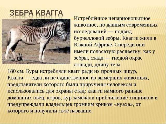 Истреблённоенепарнокопытное животное, по данным современных исс...