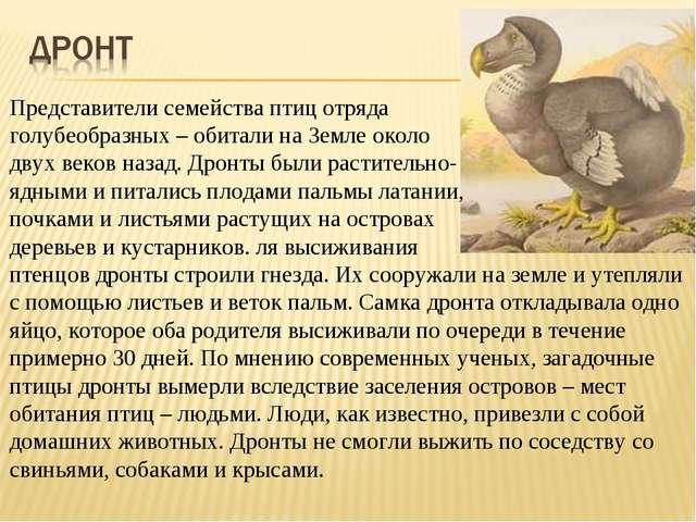 Представители семейства птиц отряда голубеобразных – обитали на Земле около д...