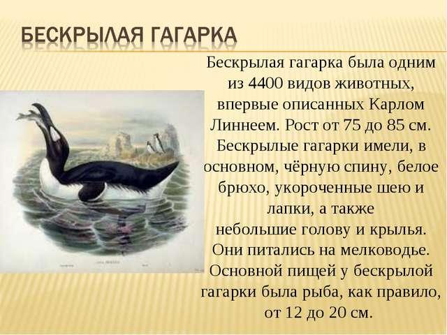 Бескрылая гагарка была одним из 4400 видов животных, впервые описанныхКарлом...