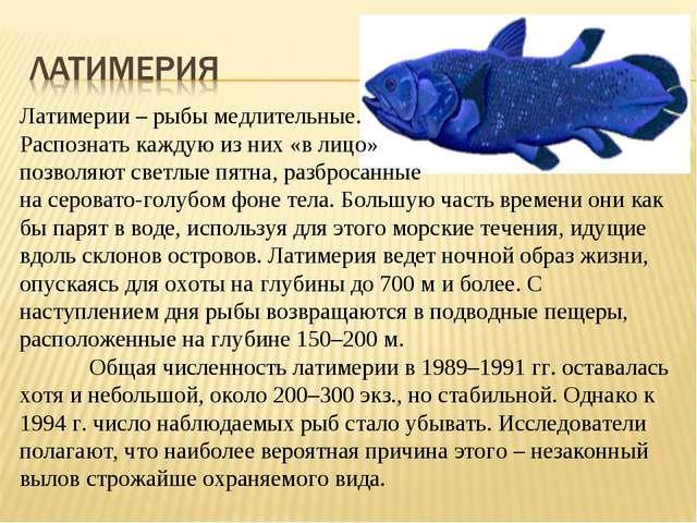 Латимерии – рыбы медлительные. Распознать каждую из них «в лицо» позволяют св...