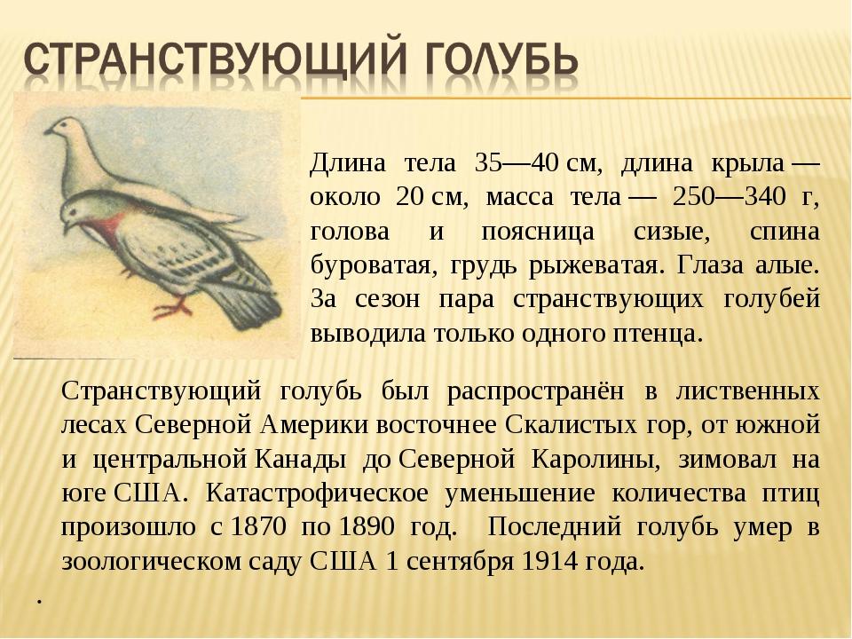 Длина тела 35—40см, длина крыла— около 20см, масса тела— 250—340 г, голов...