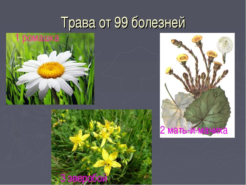 Трава от 99 болезней 1 ромашка 2 мать-и-мачиха 3 зверобой