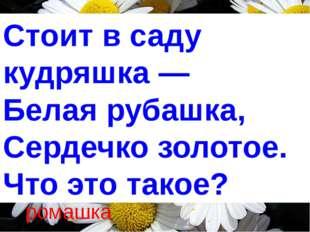 Стоит в саду кудряшка — Белая рубашка, Сердечко золотое. Что это такое? ро