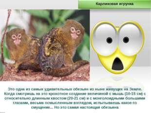 Это одна из самых удивительных обезьян из ныне живущих на Земле. Когда смотри