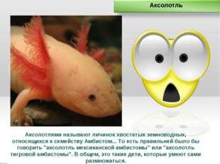 Аксолотлями называют личинок хвостатых земноводных, относящихся к семейству А