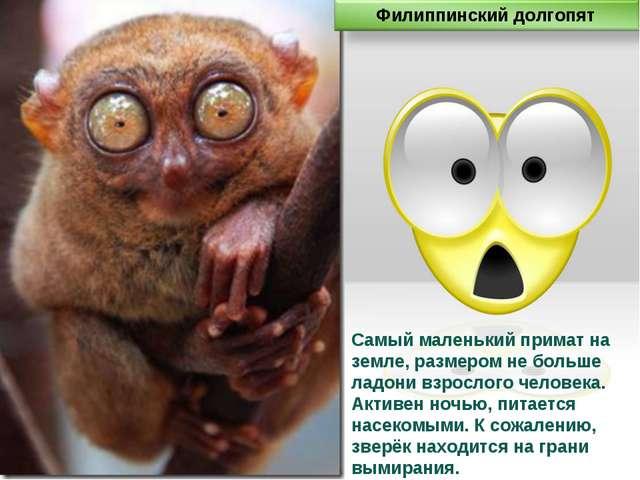 Самый маленький примат на земле, размером не больше ладони взрослого человека...
