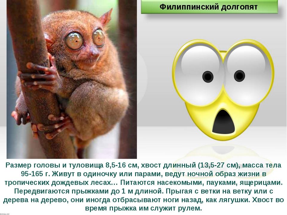 Размер головы и туловища 8,5-16 см, хвост длинный (13,5-27 см), масса тела 95...