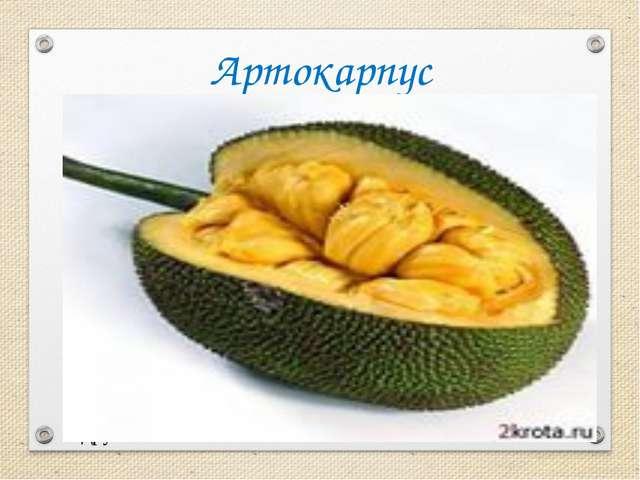 Артокарпус В странах Юго - восточной Азии есть растения с удивительными плода...