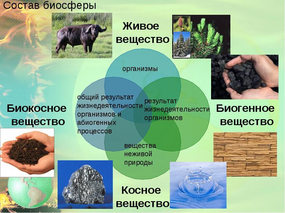 Состав биосферы организмы результат жизнедеятельности организмов вещества неж...