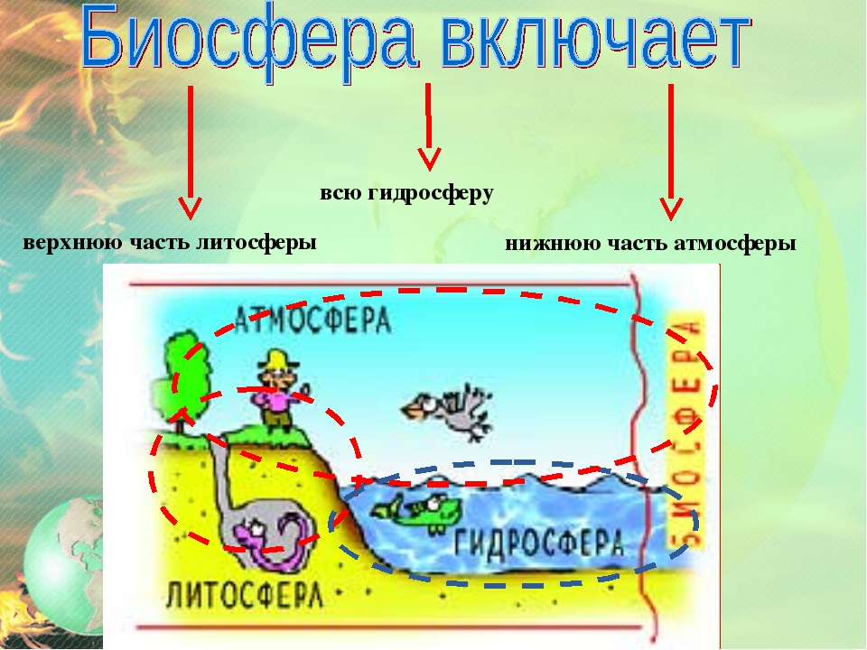 верхнюю часть литосферы всю гидросферу нижнюю часть атмосферы