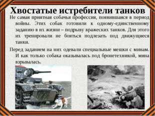 Хвостатые истребители танков Не самая приятная собачья профессия, появившаяся
