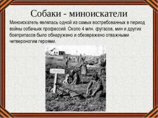 Собаки - миноискатели Миноискатель являлась одной из самых востребованных в п