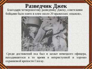 Разведчик Джек Благодаря четвероногому разведчику Джеку, советскими бойцами