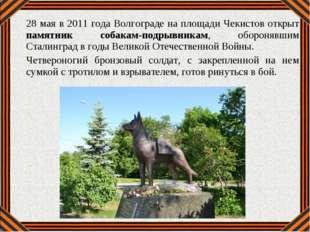 28 мая в 2011 года Волгограде на площади Чекистов открыт памятник собакам-под