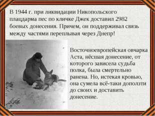 Восточноевропейская овчарка Аста, нёсшая донесение, от которого зависела судь