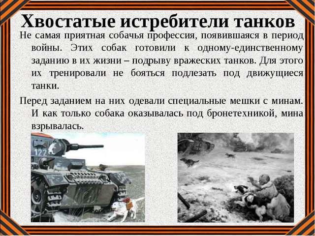 Хвостатые истребители танков Не самая приятная собачья профессия, появившаяся...