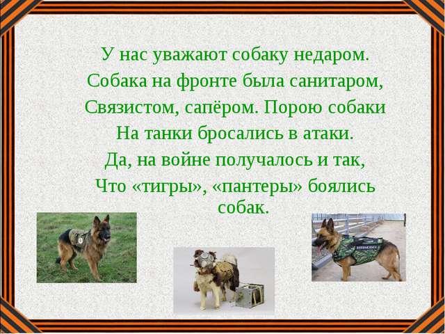 У нас уважают собаку недаром. Собака на фронте была санитаром, Связистом, сап...