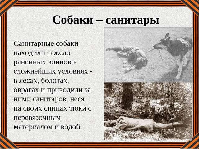 Собаки – санитары Санитарные собаки находили тяжело раненных воинов в сложней...