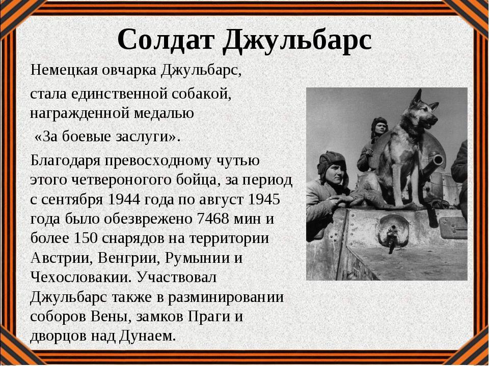 Солдат Джульбарс Немецкая овчарка Джульбарс, стала единственной собакой, нагр...