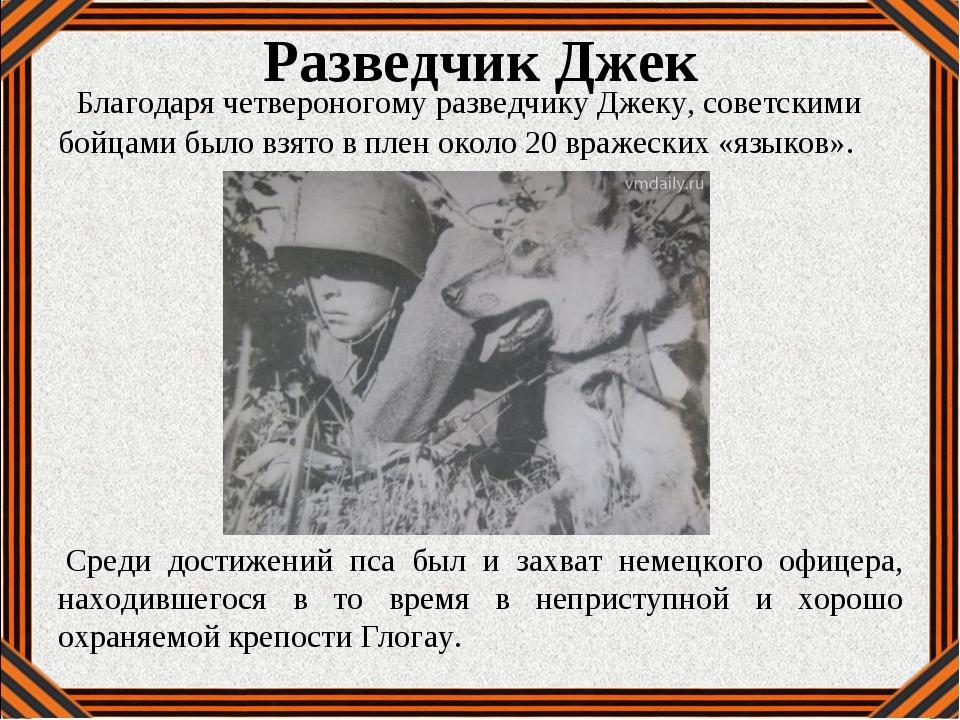 Разведчик Джек Благодаря четвероногому разведчику Джеку, советскими бойцами...