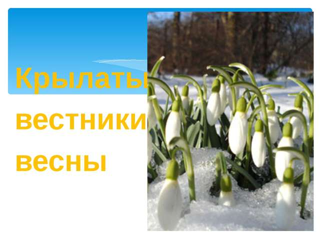 Крылатые вестники весны