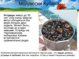 Моллюски Кубани. Устрицы живут до 30 лет. Они очень живучи: могут обходиться