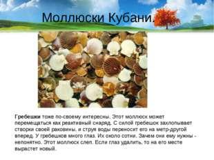 Моллюски Кубани. Гребешки тоже по-своему интересны. Этот моллюск может переме