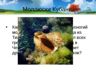 Моллюски Кубани. Какой свирепый хищник - брюхоногий моллюск, который прибыл с