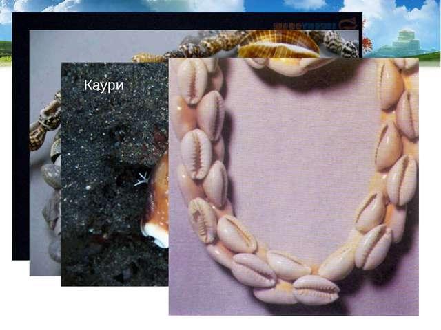 Раковины используются как сувениры и поделочный материал. В старину раковины...